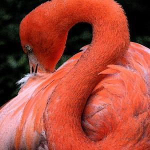 Davie, Fort Lauderdale, Florida, flamingos, nature, alligators, tour, botanical garden, wildlife, travel, things to do, family, fun, kids, children, coupon, coupons, discount