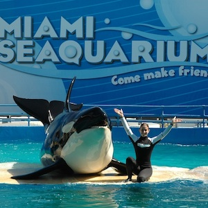 Miami, Florida, aquarium, zoo, manatees, travel, things to do, family, fun, kids, childen, coupon, coupons, discount