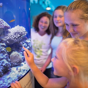 Sarasota, Florida, aquarium, zoo, marine life, travel, things to do, family, fun, kids, children, coupon, coupons, discount