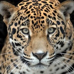 Savings coupon for Zoo Miami in Miami, Florida