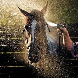 Lexington, Kentucky, horse, horses, tour, animals, family, fun, kids, children, cooupon, coupons, discount