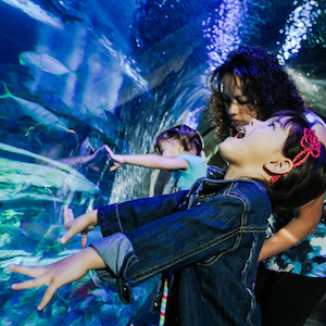 Savings coupon for SEA LIFE Kansas City, Missouri - aquarium, zoo, things to do, family fun, kids, travel, coupon, coupons, discount