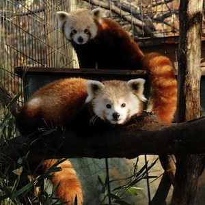 Roanoke, Virginia, zoo, aquarium, family fun, children, kids, animals, coupon, coupons, save