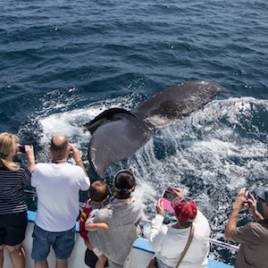 California whalewatching and sport fishing at Newport Landing in Newport Beach, California