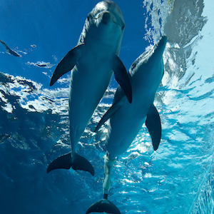 Clearwater, Florida, aquarium, zoo, things to do, travel, family, fun, kids, children, coupon, coupons, discount