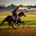 Thoroughbred Center Kentucky, travel, things to do, family, fun, kids, children, coupon