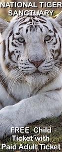 Savings coupon for the National Tiger Sanctuary in Saddlebrooke, Missouri