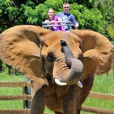 Savings coupon for Natural Bridge Zoo in Natural Bridge, Virginia - kids, family, travel