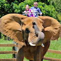 Natural Bridge Zoo in Virginia, travel, things to do, family, fun, kids, children, coupon