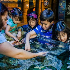 Savings coupon for SEA LIFE Aquarium Arizona in Tempe, Arizona, travel, things to do, family, fun, kids, children