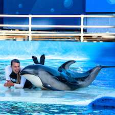 Savings coupon for Miami Seaquarium in Florida, aquarium, zoo, things to do, family,