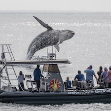 California whalewatching coupon from Newport Coastal Adventure  in Newport Beach, California